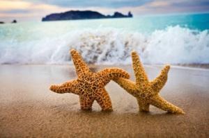 starfish-networking